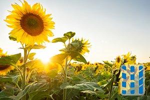plantensoorten die astma aanvallen veroorzaken luchtreinigeradvies