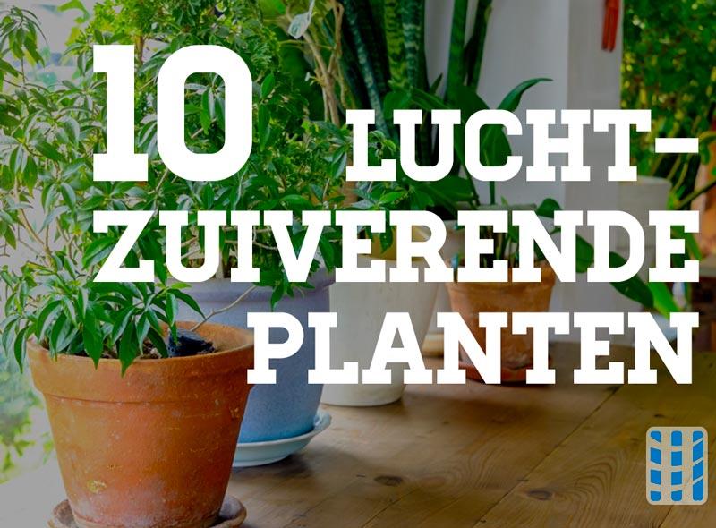 Zuiverende Planten Slaapkamer : Zuiverende planten slaapkamer u artsmedia