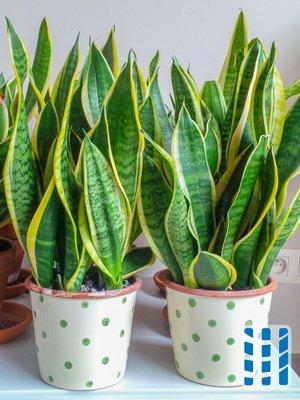 de kwaliteit van de binnenlucht verbeteren met luchtzuiverende kamerplanten