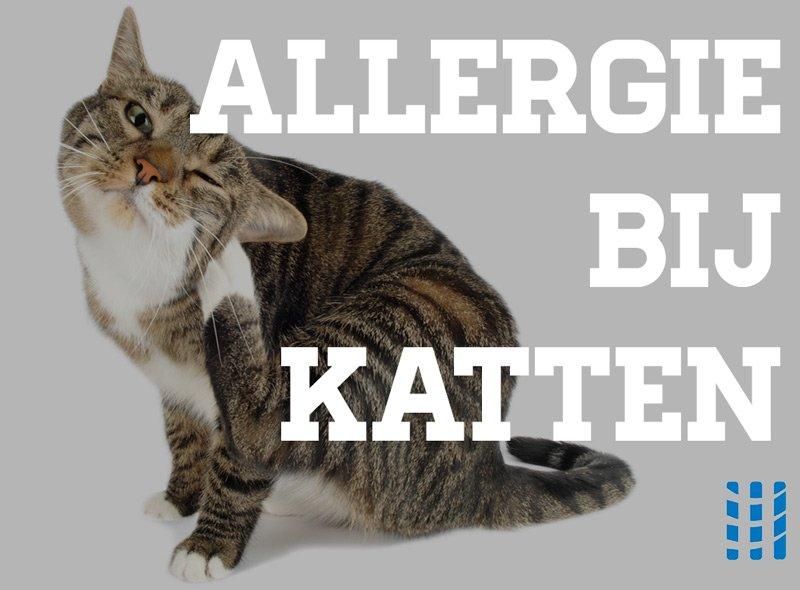 allergie bij katten luchtreinigeradvies