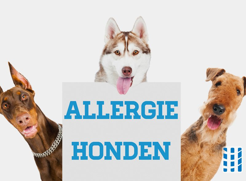 allergie honden luchtreinigeradvies