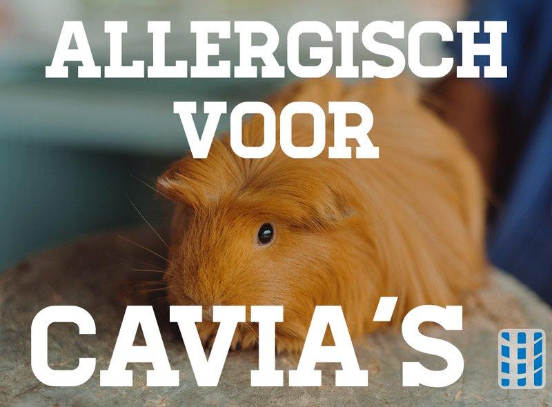 allergisch voor cavia's luchtreinigeradvies