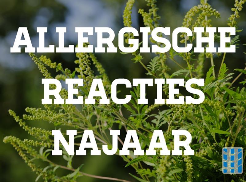 ambrosia kruidachtige planten allergische reacties tijdens het najaar