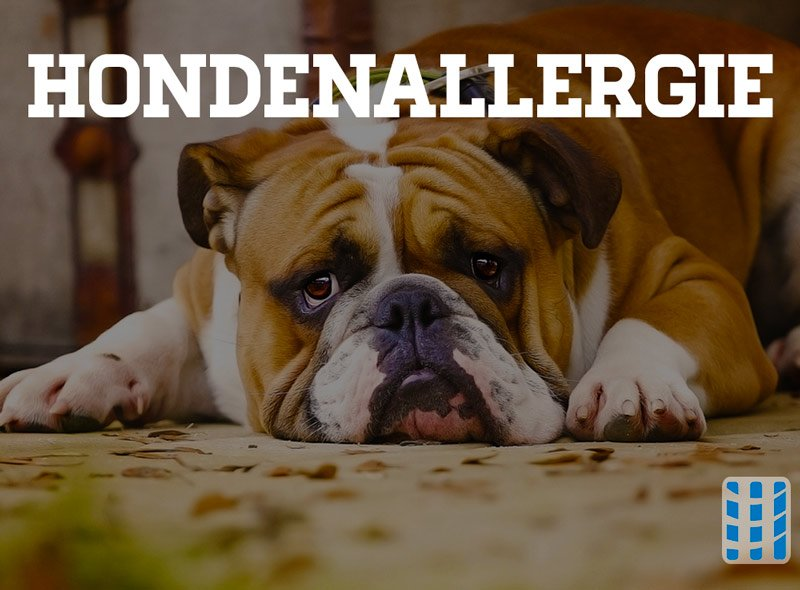 hondenallergie luchtreinigeradvies