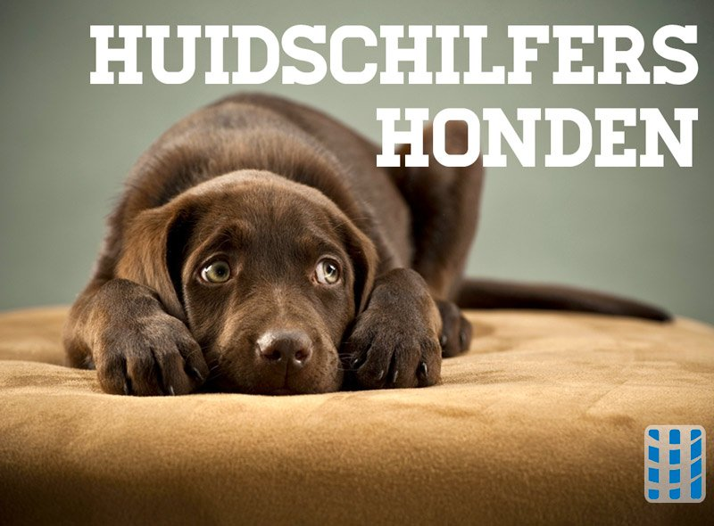 huidschilfers honden luchtreinigeradvies