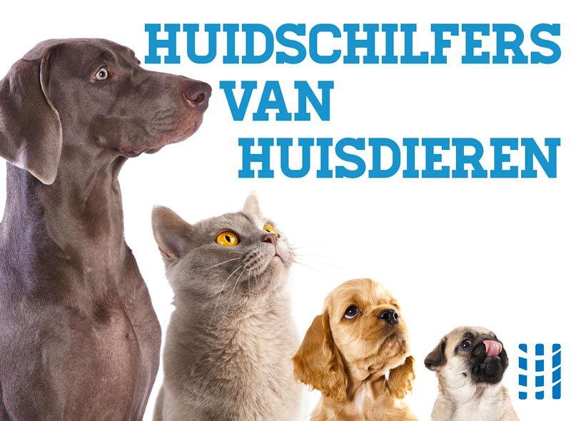 huidschilfers van huisdieren luchtreinigeradvies