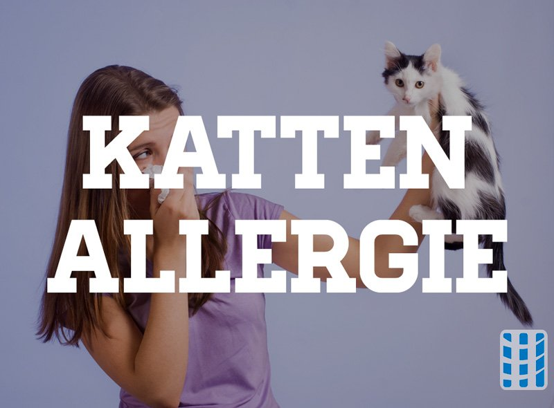 kattenallergie luchtreinigeradvies
