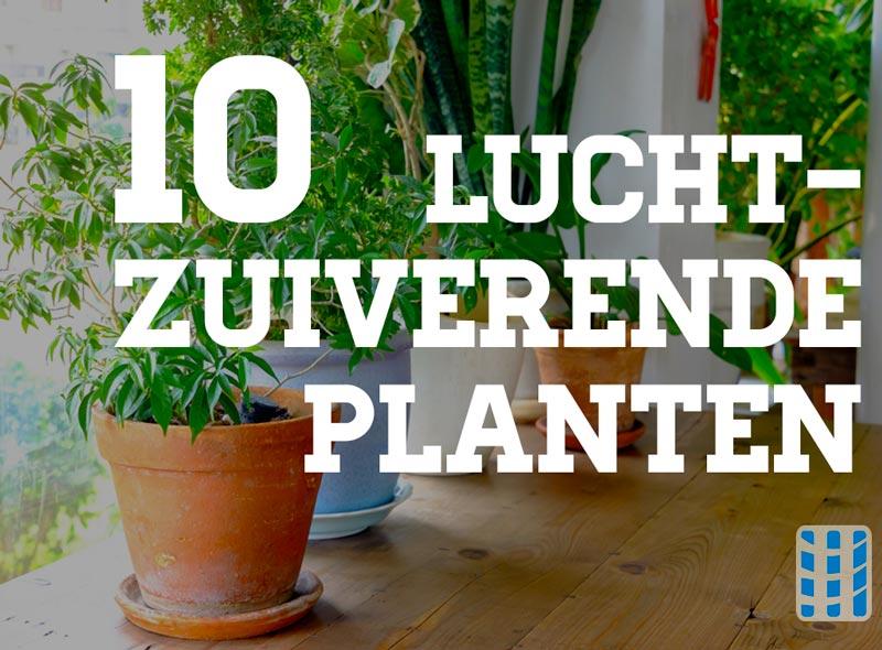 Allergie Planten Huid : Luchtzuiverende planten voor betere binnenluchtkwaliteit