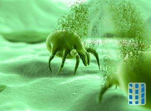 stofzuiger allergie dieptereiniger luchtreinigeradvies