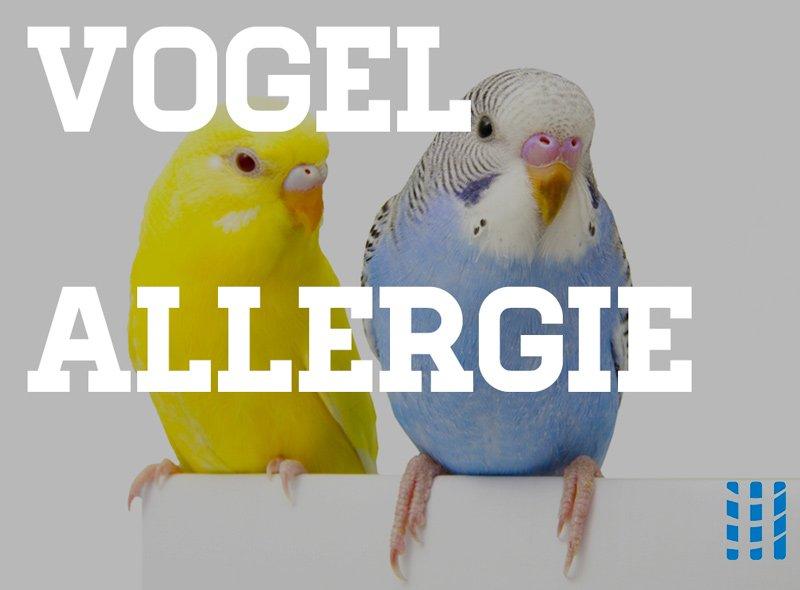 vogel allergie luchtreinigeradvies